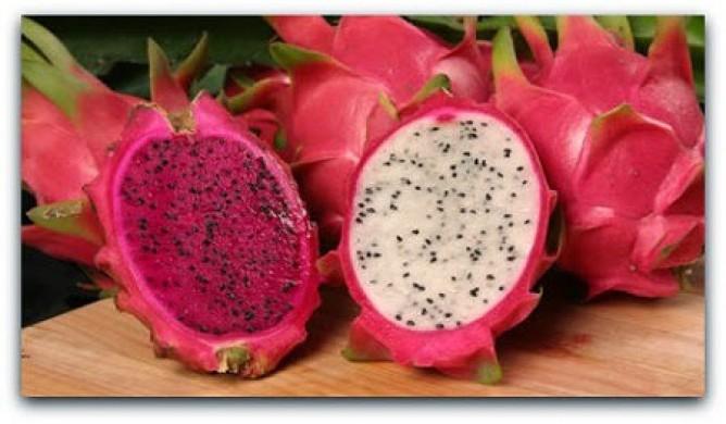 Harga buah Naga tahun 2016