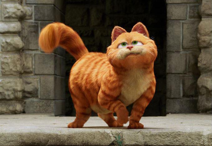 Kucing mirip garfield