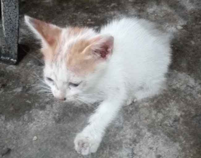 Perkembangan anak kucing