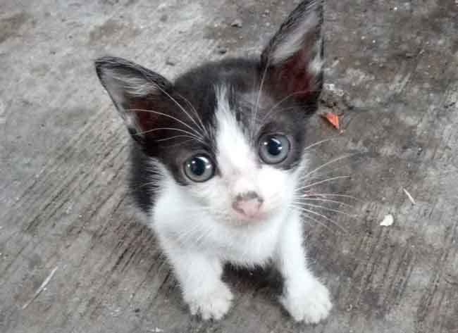 Anak-Anak kucing usia 3-4 minggu