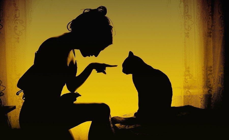 Lea dan kucing
