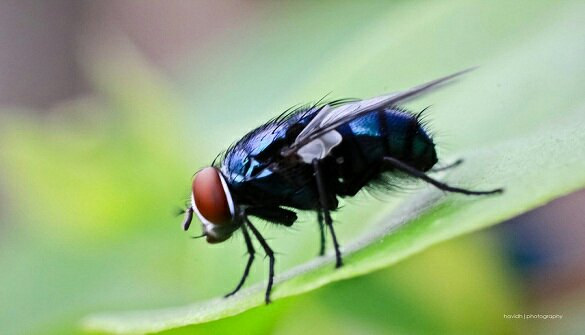 Menangkap Lalat